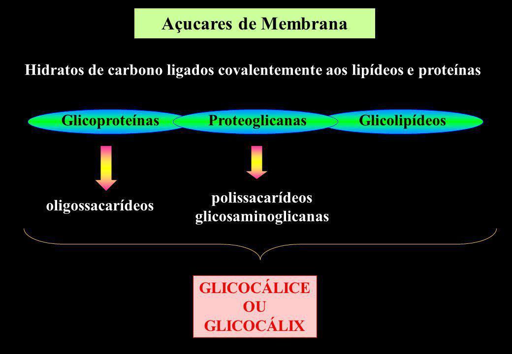 Açucares de Membrana Hidratos de carbono ligados covalentemente aos lipídeos e proteínas. Glicoproteínas.