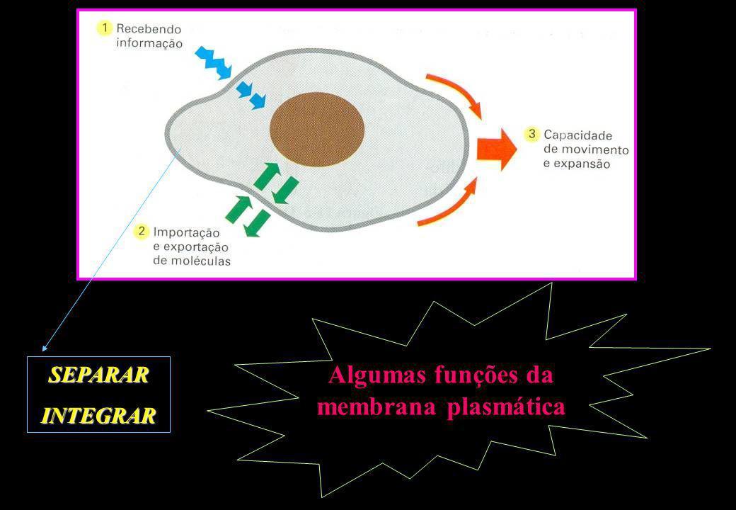 Algumas funções da membrana plasmática