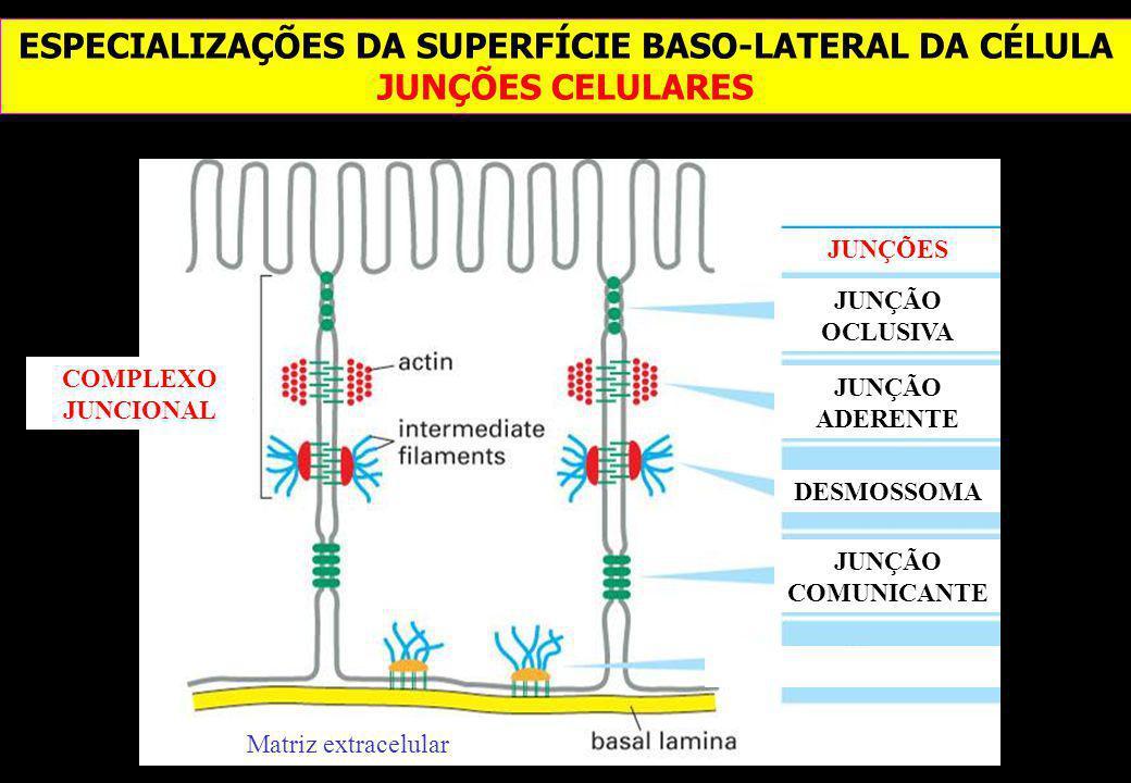 ESPECIALIZAÇÕES DA SUPERFÍCIE BASO-LATERAL DA CÉLULA JUNÇÕES CELULARES