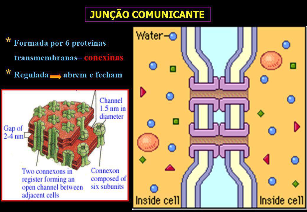 * Formada por 6 proteínas transmembranas– conexinas