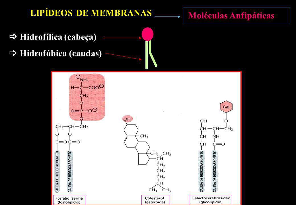 Moléculas Anfipáticas