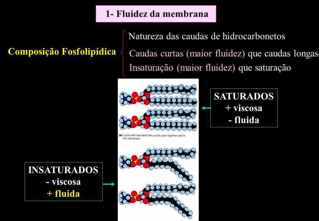 1- Fluidez da membrana Natureza das caudas de hidrocarbonetos. Composição Fosfolipídica. Caudas curtas (maior fluidez) que caudas longas.