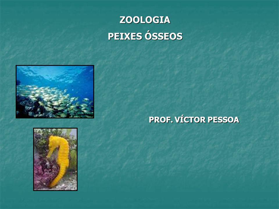 ZOOLOGIA PEIXES ÓSSEOS