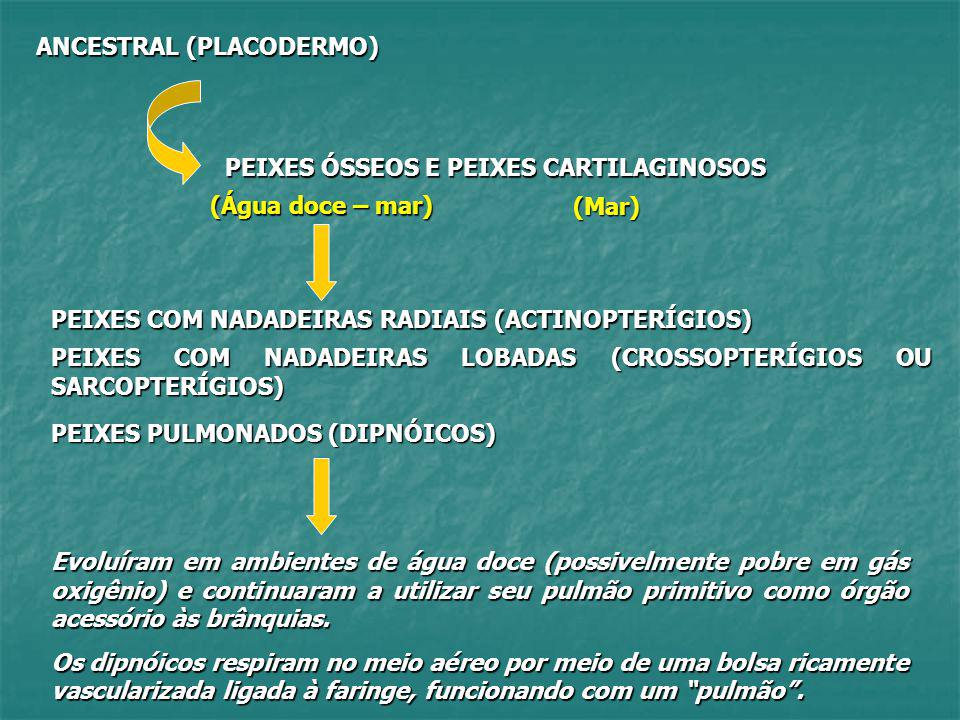 ANCESTRAL (PLACODERMO)