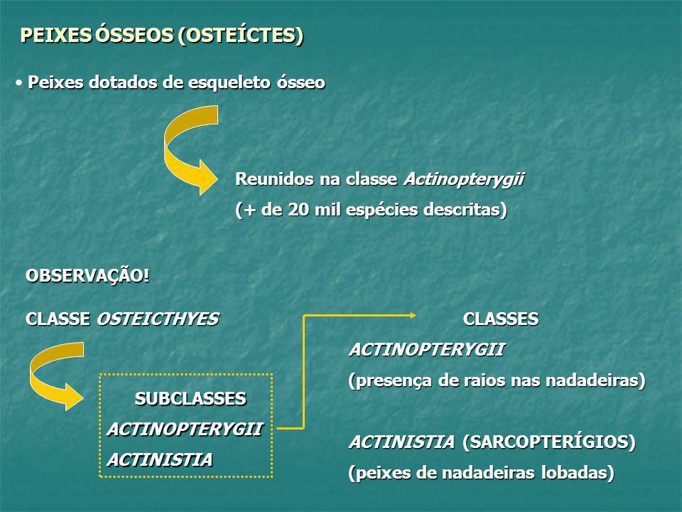 PEIXES ÓSSEOS (OSTEÍCTES)