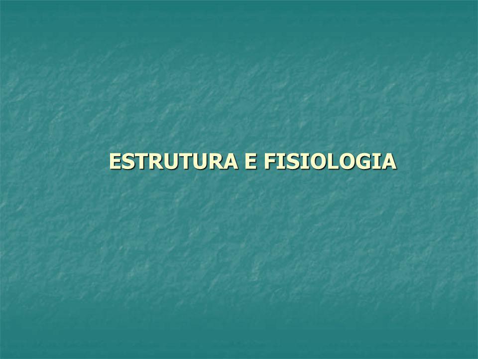 ESTRUTURA E FISIOLOGIA