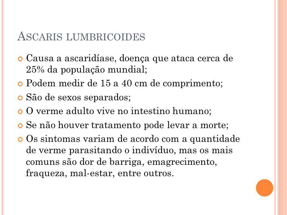 Ascaris lumbricoides Causa a ascaridíase, doença que ataca cerca de 25% da população mundial; Podem medir de 15 a 40 cm de comprimento;