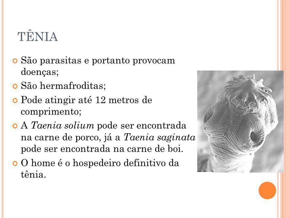 TÊNIA São parasitas e portanto provocam doenças; São hermafroditas;