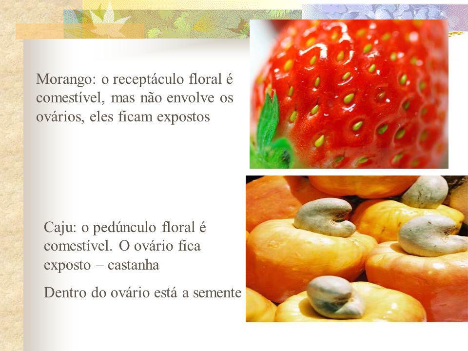 Morango: o receptáculo floral é comestível, mas não envolve os ovários, eles ficam expostos
