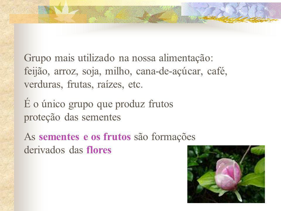Grupo mais utilizado na nossa alimentação: feijão, arroz, soja, milho, cana-de-açúcar, café, verduras, frutas, raízes, etc.