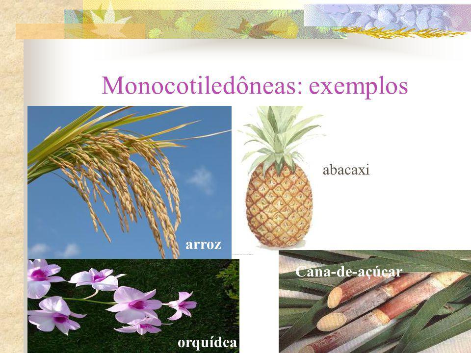 Monocotiledôneas: exemplos