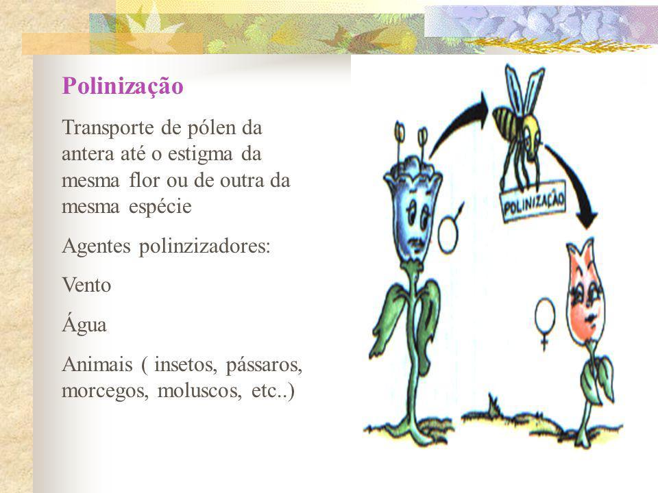 Polinização Transporte de pólen da antera até o estigma da mesma flor ou de outra da mesma espécie.