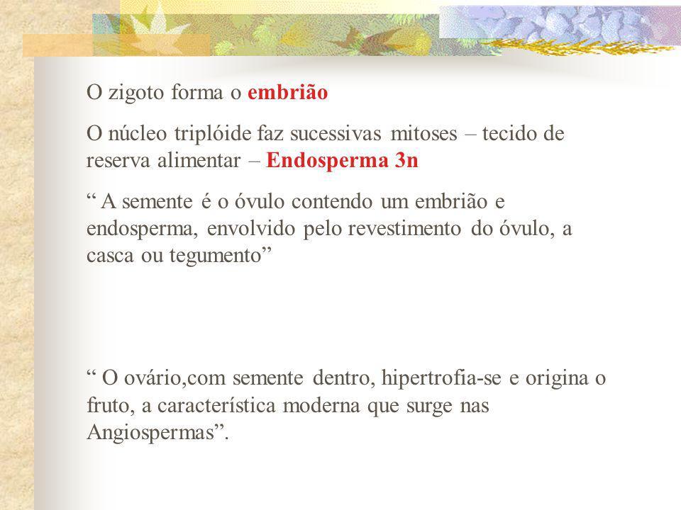 O zigoto forma o embrião