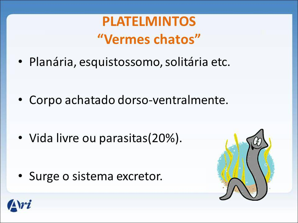 PLATELMINTOS Vermes chatos