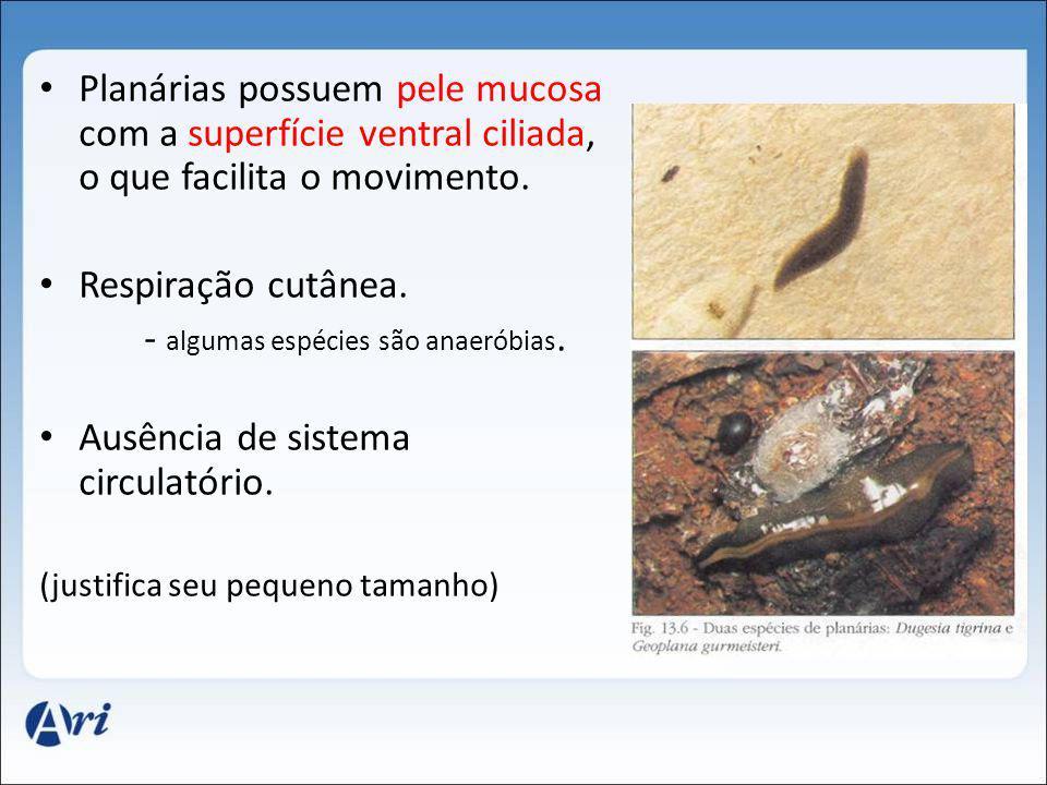 - algumas espécies são anaeróbias. Ausência de sistema circulatório.