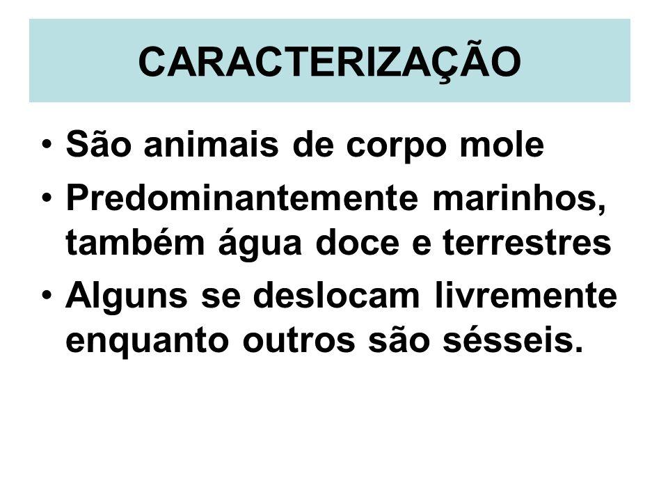 CARACTERIZAÇÃO São animais de corpo mole
