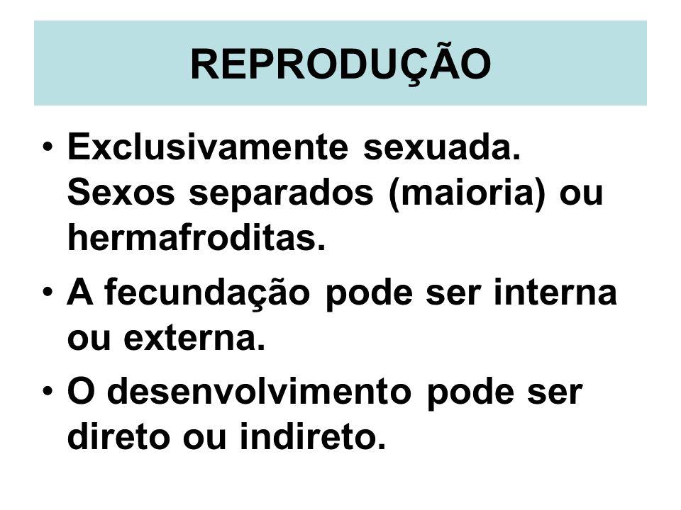 REPRODUÇÃO Exclusivamente sexuada. Sexos separados (maioria) ou hermafroditas. A fecundação pode ser interna ou externa.