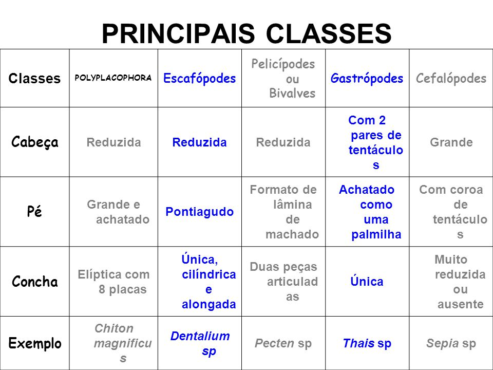 PRINCIPAIS CLASSES Classes Cabeça Pé Concha Exemplo Escafópodes
