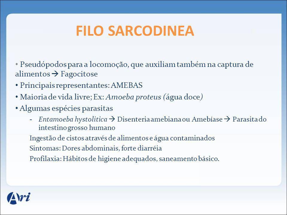 FILO Sarcodinea Pseudópodos para a locomoção, que auxiliam também na captura de alimentos  Fagocitose.