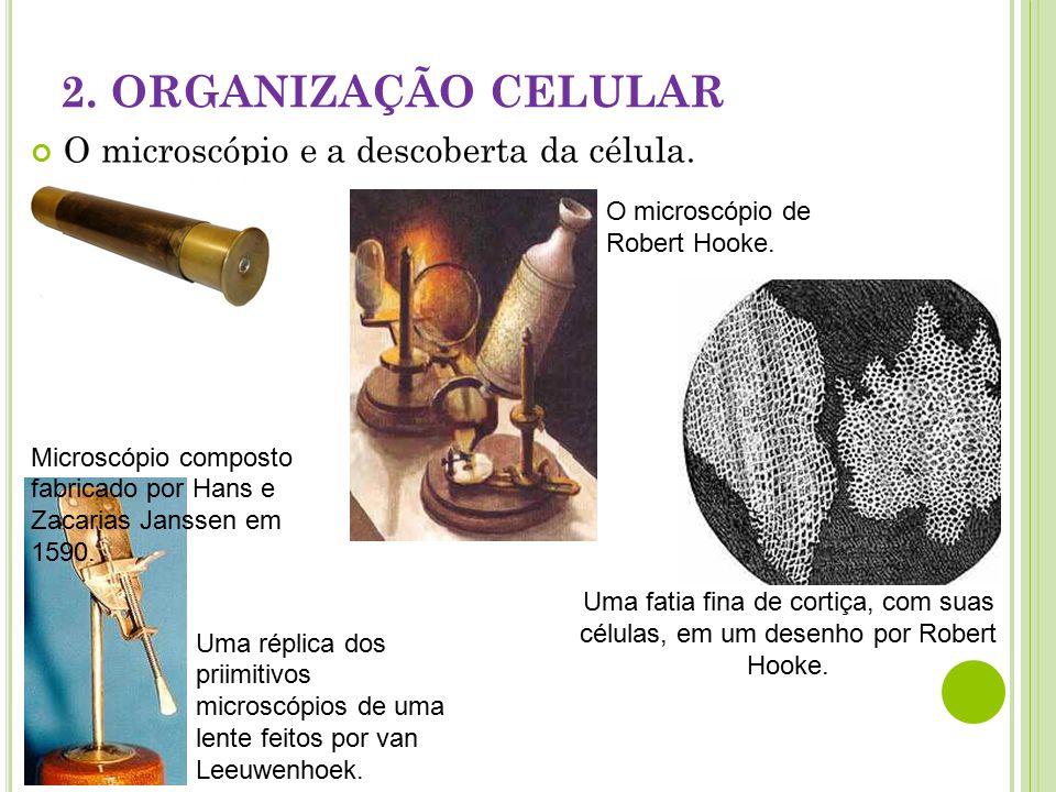 2. ORGANIZAÇÃO CELULAR O microscópio e a descoberta da célula.