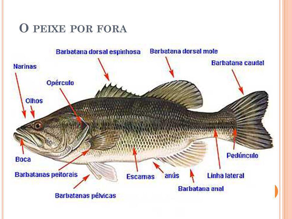 O peixe por fora