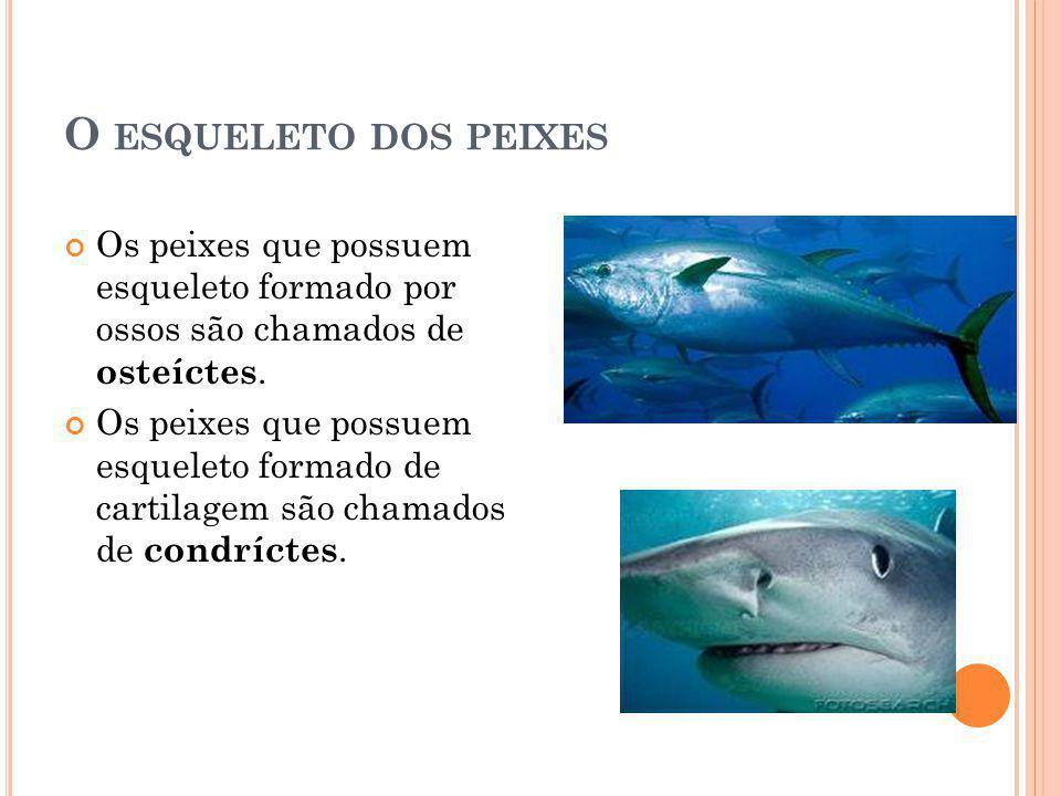 O esqueleto dos peixes Os peixes que possuem esqueleto formado por ossos são chamados de osteíctes.