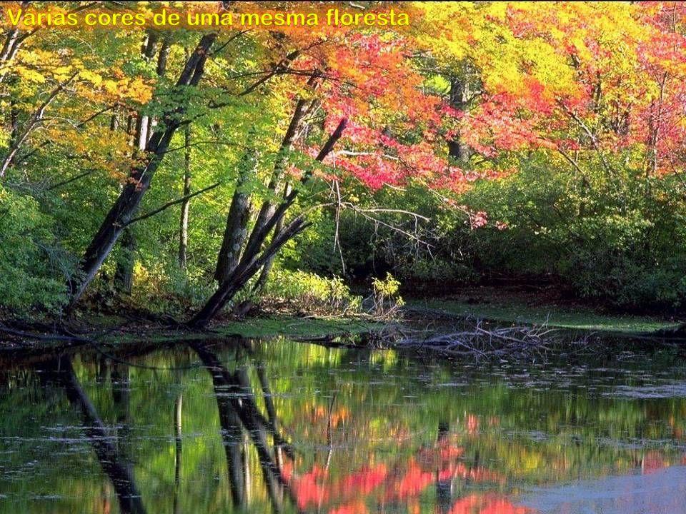Várias cores de uma mesma floresta