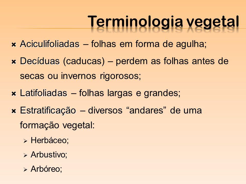 Terminologia vegetal Aciculifoliadas – folhas em forma de agulha;