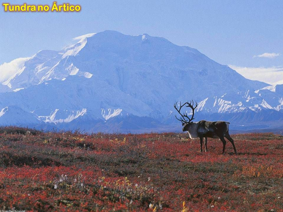 Tundra no Ártico