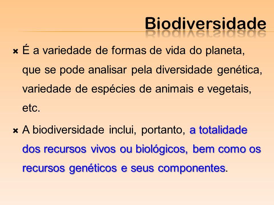É a variedade de formas de vida do planeta, que se pode analisar pela diversidade genética, variedade de espécies de animais e vegetais, etc.