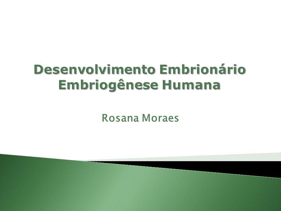 Desenvolvimento Embrionário Embriogênese Humana