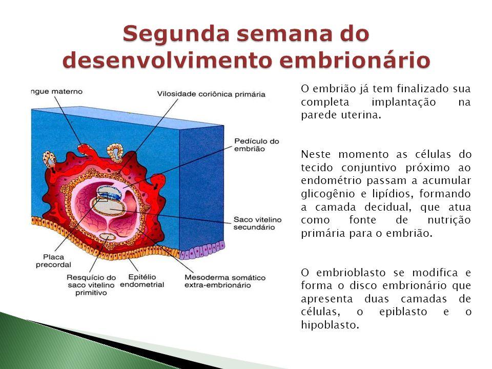 Segunda semana do desenvolvimento embrionário