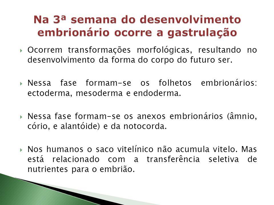Na 3ª semana do desenvolvimento embrionário ocorre a gastrulação