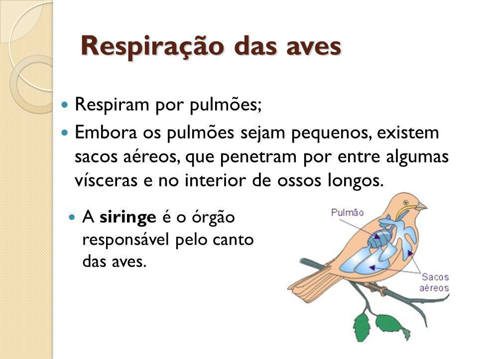 Respiração das aves Respiram por pulmões;