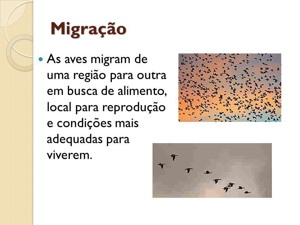 Migração As aves migram de uma região para outra em busca de alimento, local para reprodução e condições mais adequadas para viverem.