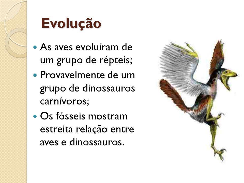 Evolução As aves evoluíram de um grupo de répteis;