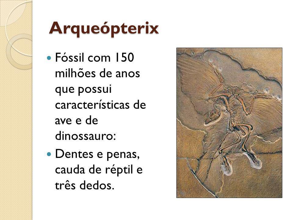 Arqueópterix Fóssil com 150 milhões de anos que possui características de ave e de dinossauro: