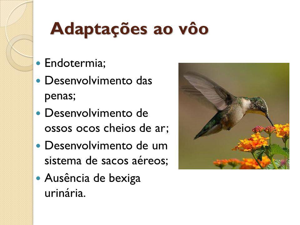 Adaptações ao vôo Endotermia; Desenvolvimento das penas;