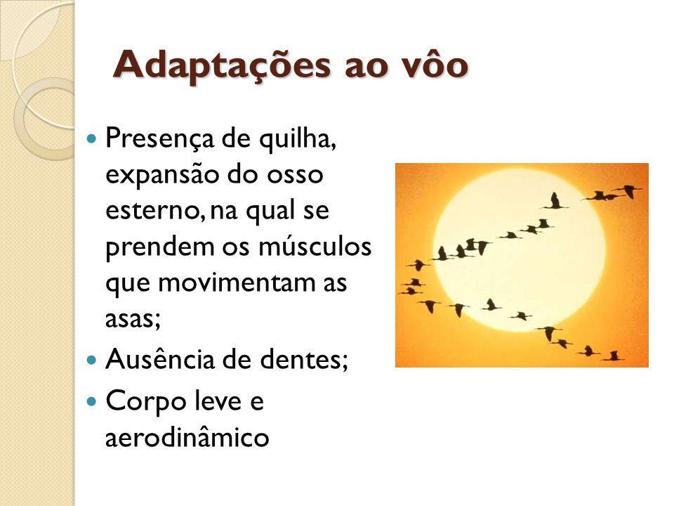 Adaptações ao vôo Presença de quilha, expansão do osso esterno, na qual se prendem os músculos que movimentam as asas;