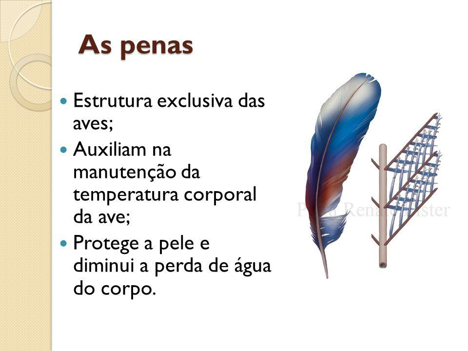 As penas Estrutura exclusiva das aves;