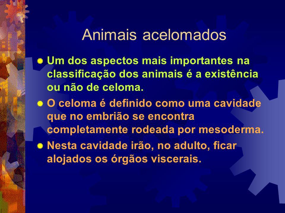 Animais acelomados Um dos aspectos mais importantes na classificação dos animais é a existência ou não de celoma.