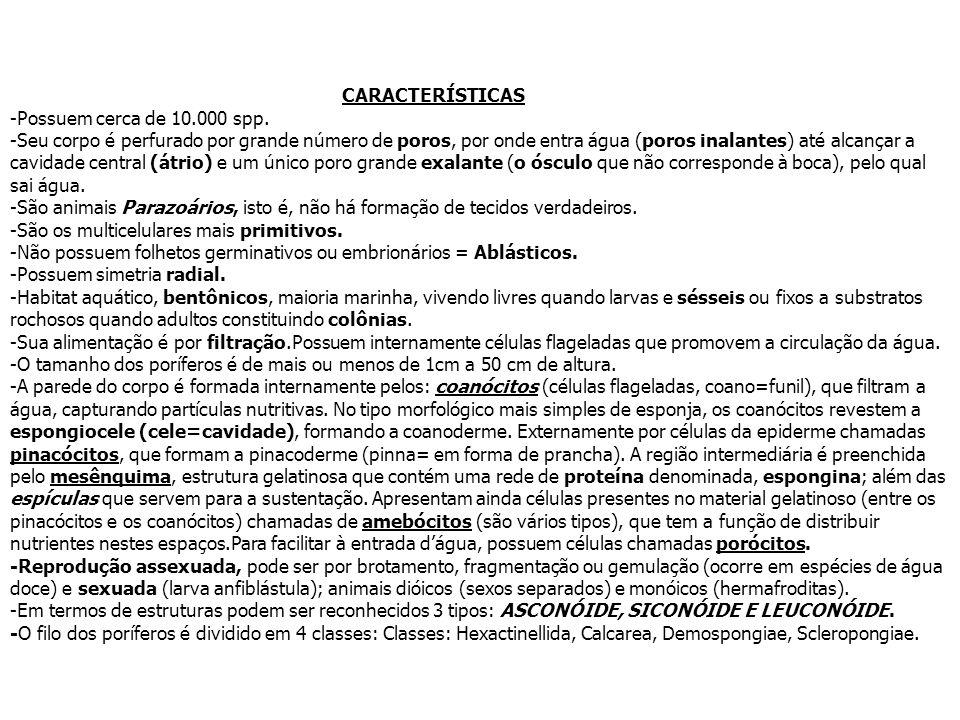 CARACTERÍSTICAS -Possuem cerca de 10.000 spp.