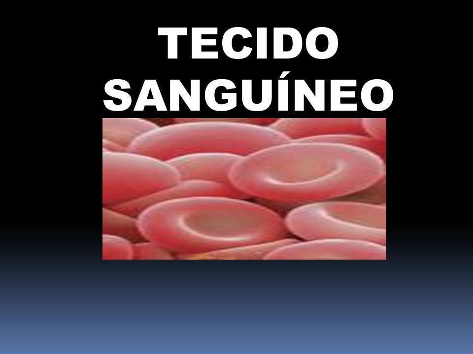 TECIDO SANGUÍNEO
