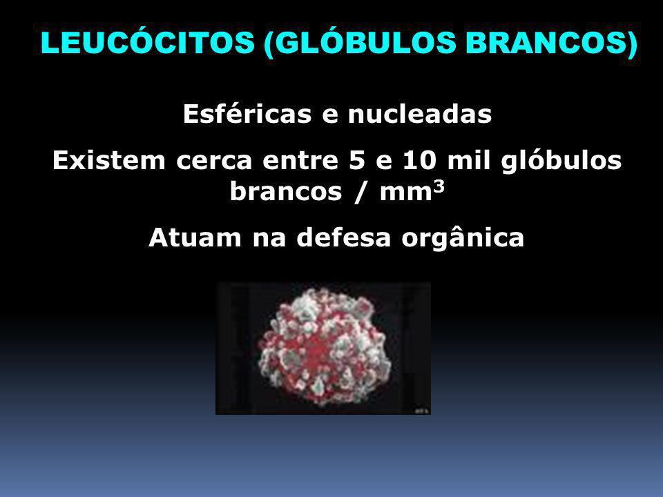 LEUCÓCITOS (GLÓBULOS BRANCOS)