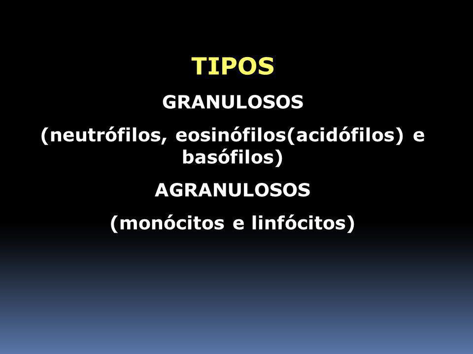 TIPOS GRANULOSOS (neutrófilos, eosinófilos(acidófilos) e basófilos)