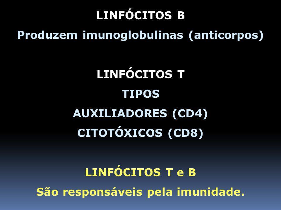 Produzem imunoglobulinas (anticorpos) São responsáveis pela imunidade.