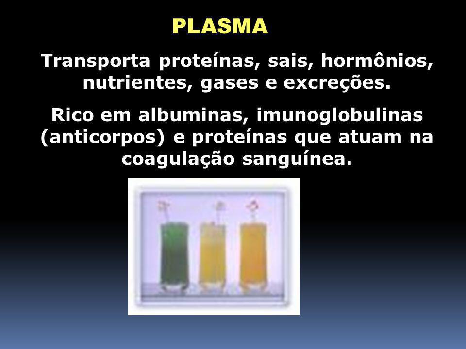 Transporta proteínas, sais, hormônios, nutrientes, gases e excreções.