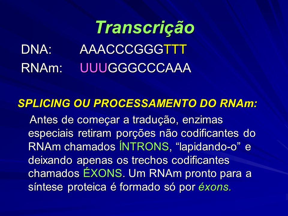Transcrição DNA: AAACCCGGGTTT RNAm: UUUGGGCCCAAA