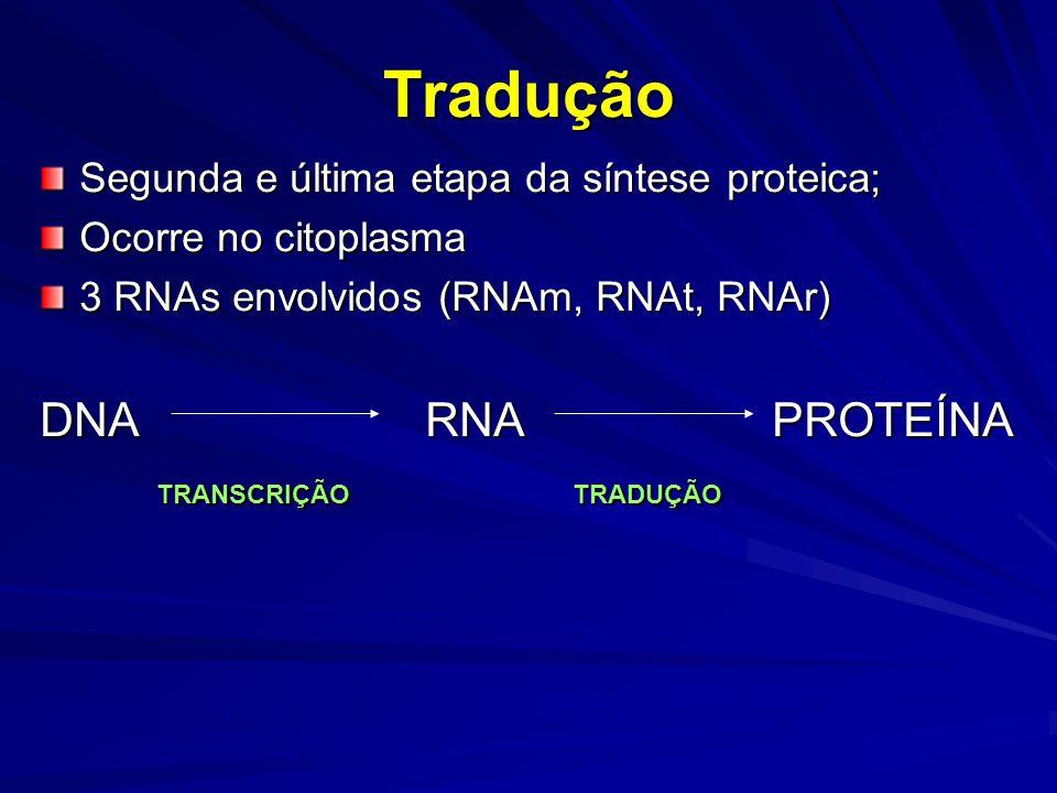 Tradução DNA RNA PROTEÍNA TRANSCRIÇÃO TRADUÇÃO