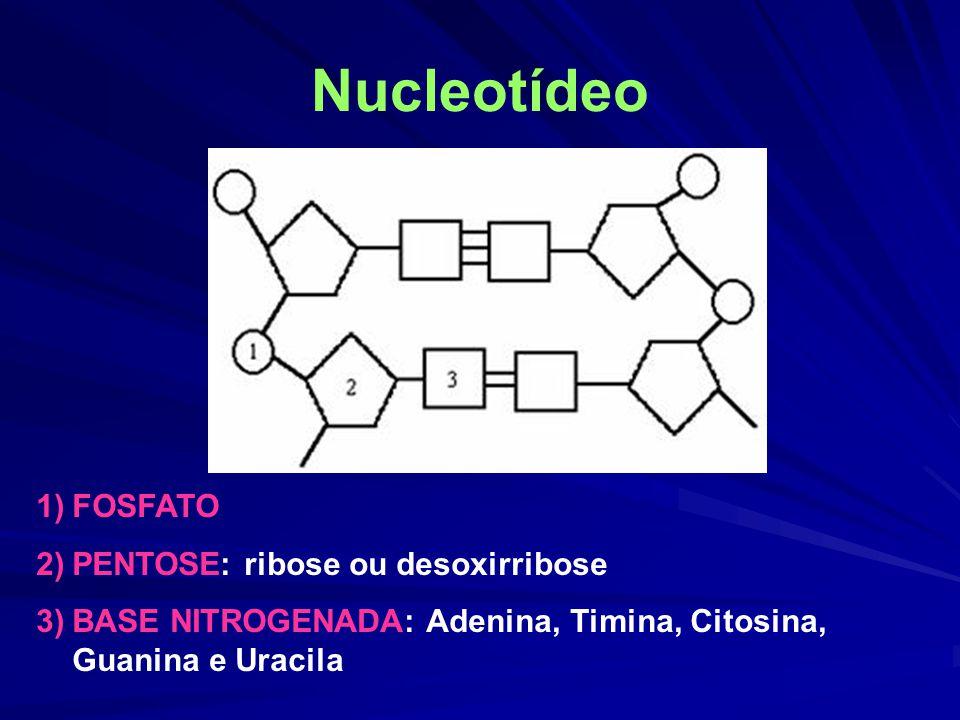 Nucleotídeo FOSFATO PENTOSE: ribose ou desoxirribose